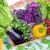 Ogród warzywny – dlaczego warto go posiadać?